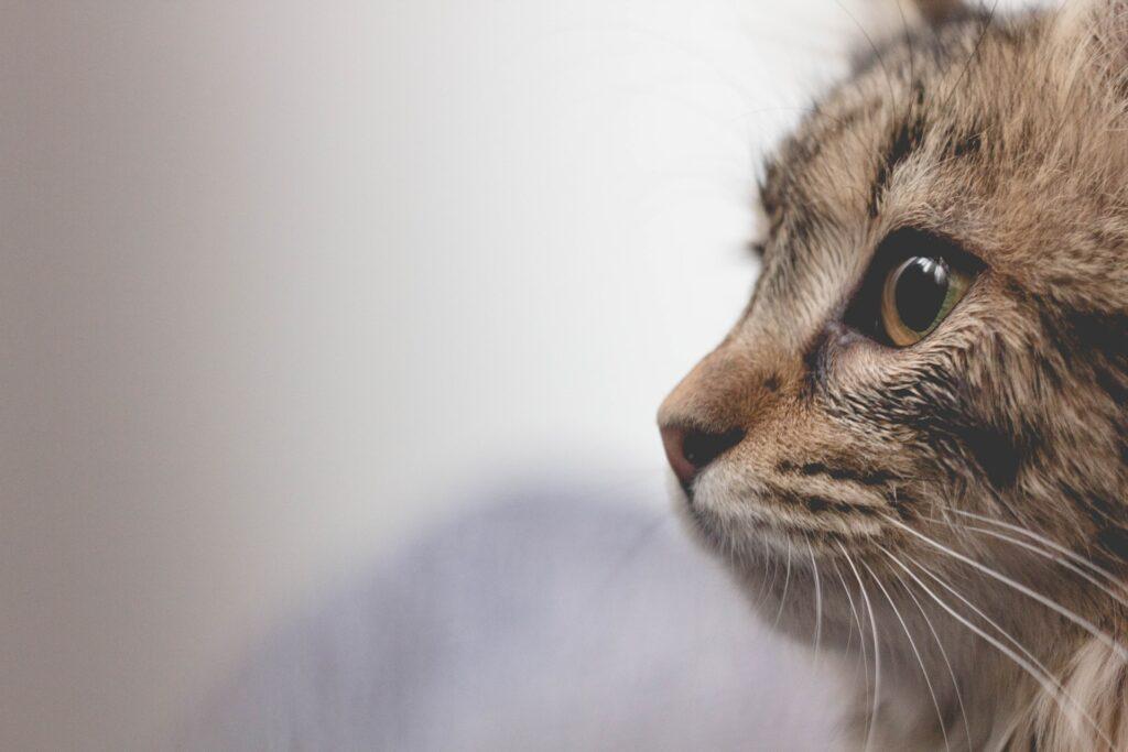 Katten dragen bij aan levenskwaliteit van mensen