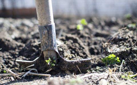 Biologische oplossing om jouw tuin insectvrij te houden