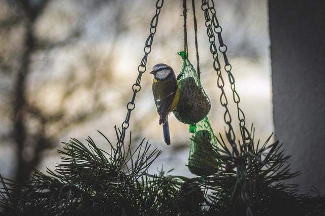 Jouw tuin vogelvriendelijker maken
